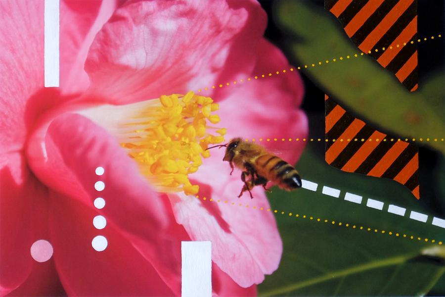 Bee line 2014.jpg