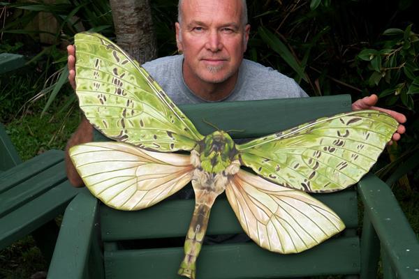 Greg's Puriri Moth sml.jpg