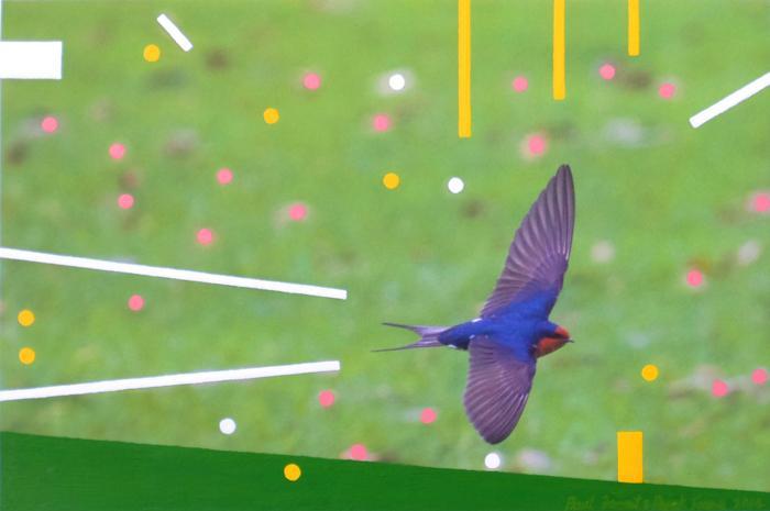 Little Swallow.jpg