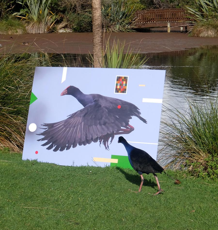 Pukeko checking out the artwork sml.jpg