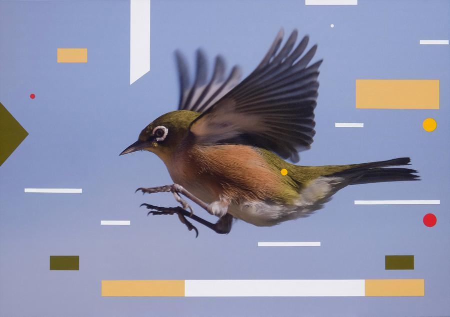 Waxeye coming into land - Mark III 2017 sml.jpg