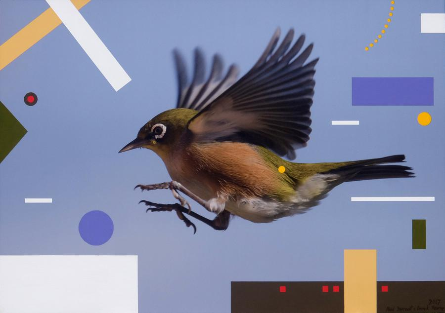 Waxeye coming into land- a variation 2017 sml.jpg